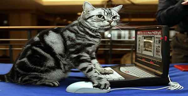 Мистические истории про кошек читать