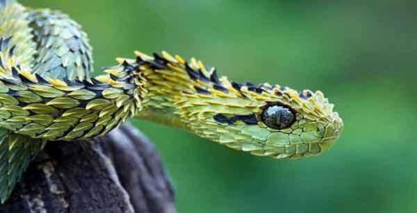Мистические истории читать про змей