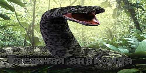 Истории про змей