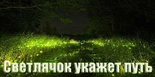Мистические истории про лес