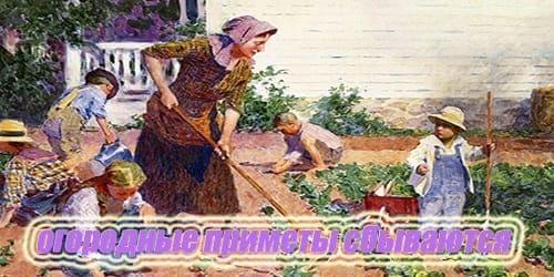 Огородные приметы сбываются