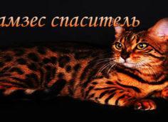 Кот спаситель