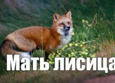 Мать лисица
