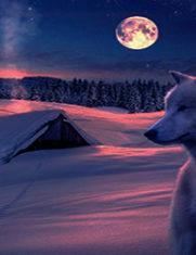 Белая волчица.