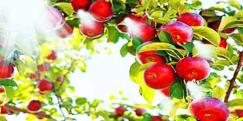 Волшебное яблоко